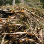 Should Policymakers Reconsider the Role of Biomass?