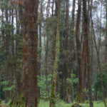 A Climate Solution We Cannot Afford to Ignore: Biomass Sourced From Naturally Managed Working Forests