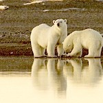 Climate Change: New Report Offers Principles for Managing the Arctic